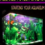 Pet Fish Ebook