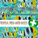Tropical_Fish_Basics