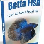 Betta_Fish_Ebook